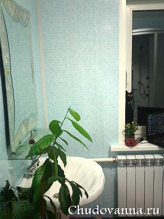 цветок в ванной комнате