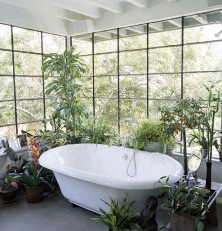 комнатные растения на полу