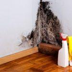 Сырость на стене