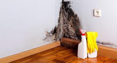 Сырость на стене: как удалить плесень самостоятельно